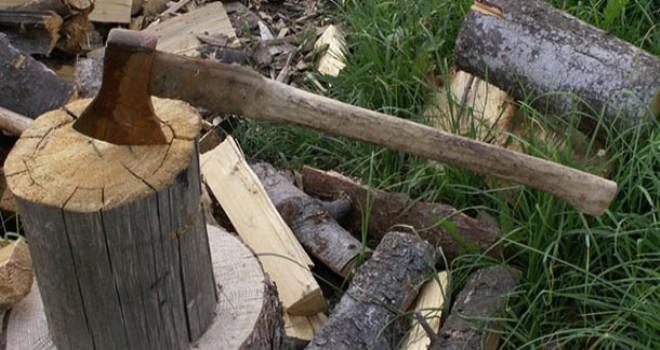Şəkidə ağac kəsənlərlə bağlı cinayət işi başlandı