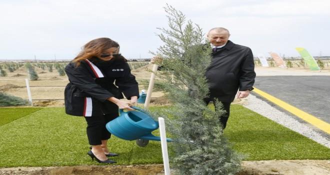 Prezidentlə xanımı Suraxanıda ağac əkdi- YENİLƏNİB-FOTO