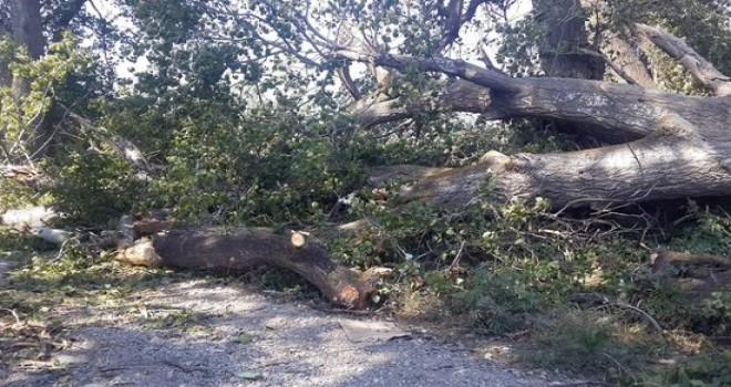 Goranboyda güclu külək ağacları aşırdı, kəndlər işıqsız qaldı - VİDEO
